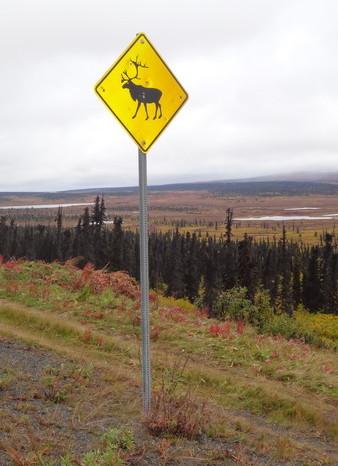 Day 4 - Moose alert!