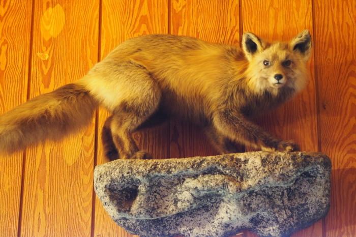 Day 3 - Fox at Long Rifle Lodge