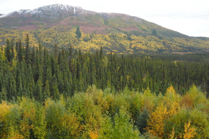 Day 8 - Alaska in Autumn