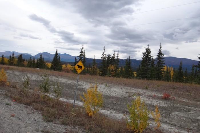 Canada 118 - Wild horses ahead!