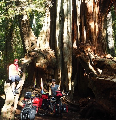 Olympic Peninsula, Washington State - Big cedars, Olympic National Park