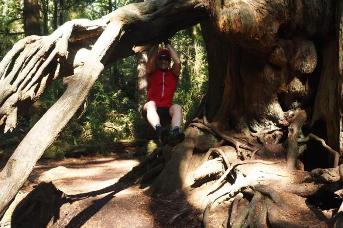 Olympic Peninsula, Washington State - David and the Big Cedar