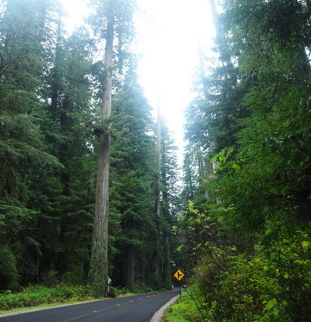 Portland to San Francisco - Stunning redwoods, Jedediah Smith Redwood State Park