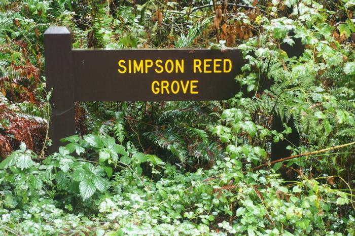 Portland to San Francisco - Jedediah Smith Redwood State Park