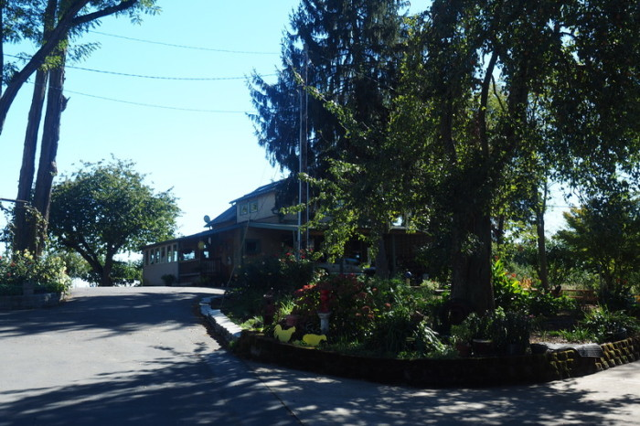 Portland to San Francisco - Ankeny Vineyard, Willamette Valley