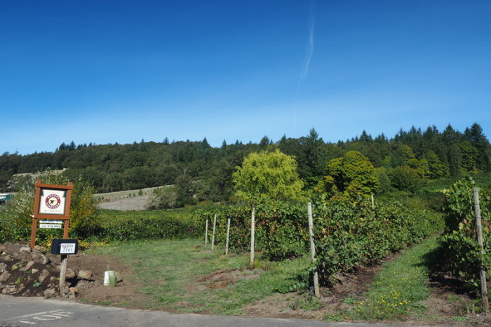 Portland to San Francisco - Ankeny Vineyard, Willamette Valley