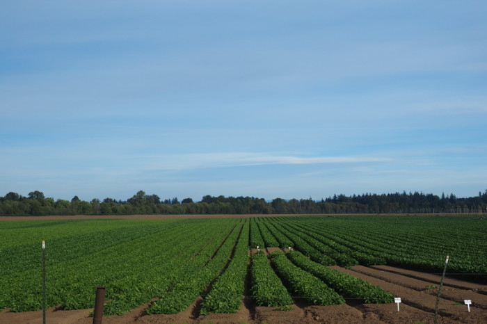Portland to San Francisco - Crops, Willamette Valley