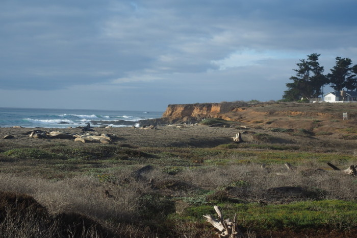 SF to LA - Seal Colony near San Simeon