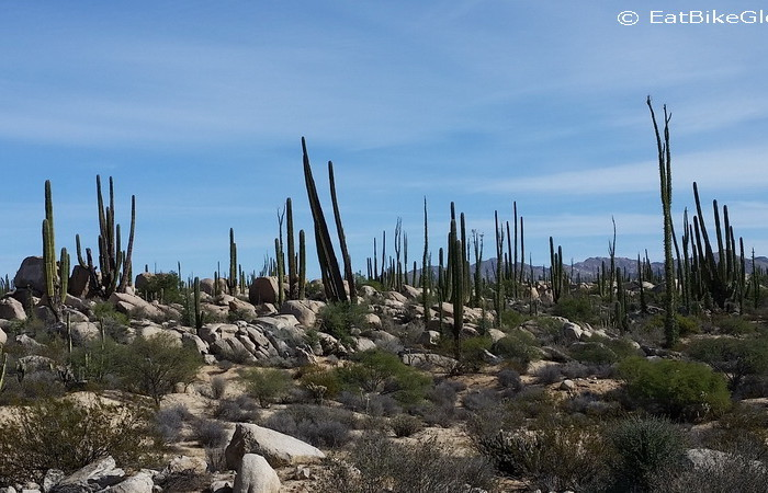 Baja California - Views of cacti on Day 2 of our Central Desert crossing