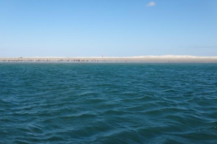 Baja California - Laguna Ojo de Liebre, near Guerrero Negro