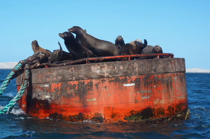 Baja California - Friendly sea lion colony near Guerrero Negro