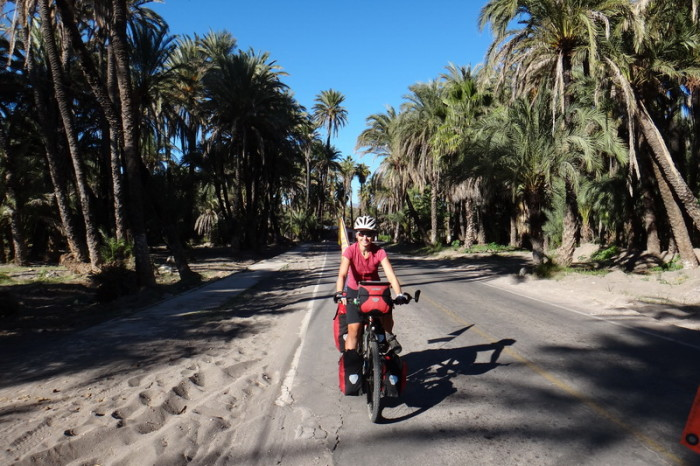Baja California - Cycling into San Ignacio along palm lined streets