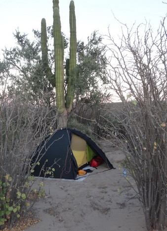 Baja California - Our sandy campsite in the desert near San Ignacio ... hidden next to a giant Cardon Cactus