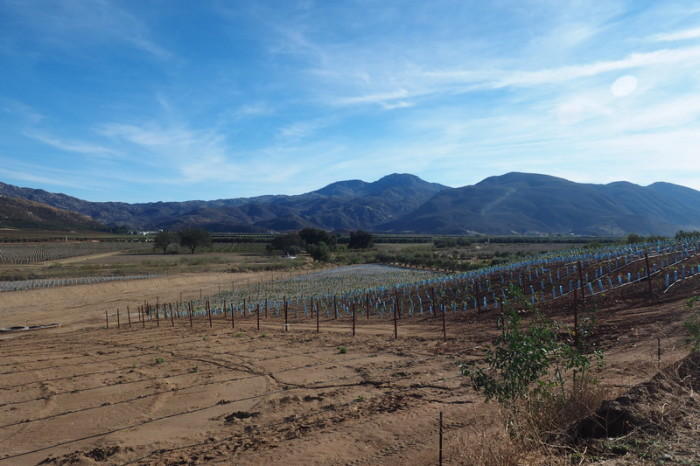 Baja California - Guadalupe Valley wine region