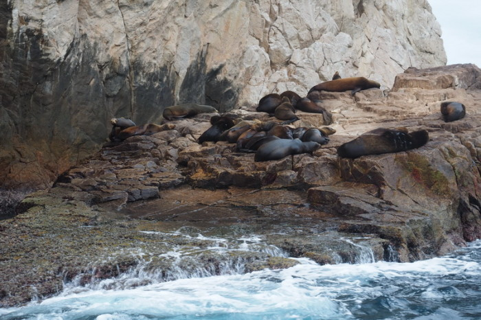 Baja California - Colony of sea lions near Cabo San Lucas
