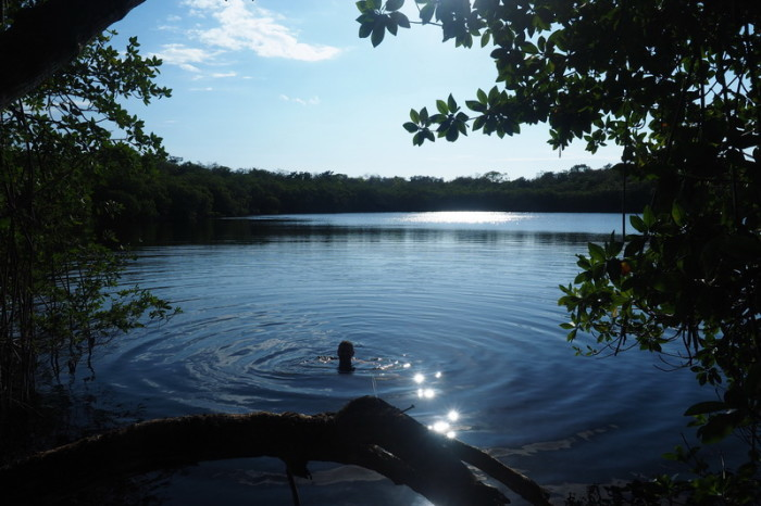 Belize - Swimming in the local cenote surrounded by mangroves, Sarteneja, Belize