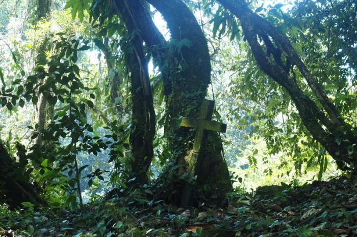 Mexican Road Trip - The beautiful grounds surrounding Misol-Ha Waterfall, Chiapas, Mexico