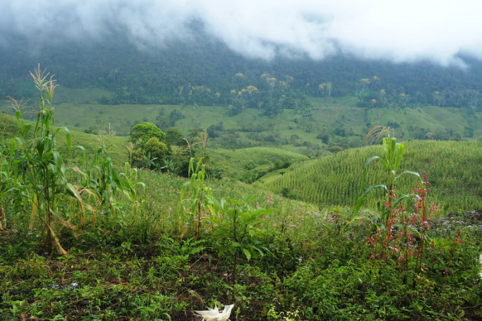 Mexican Road Trip - Views along the Carretera Fronteriza on our way back to Palenque, Chiapas