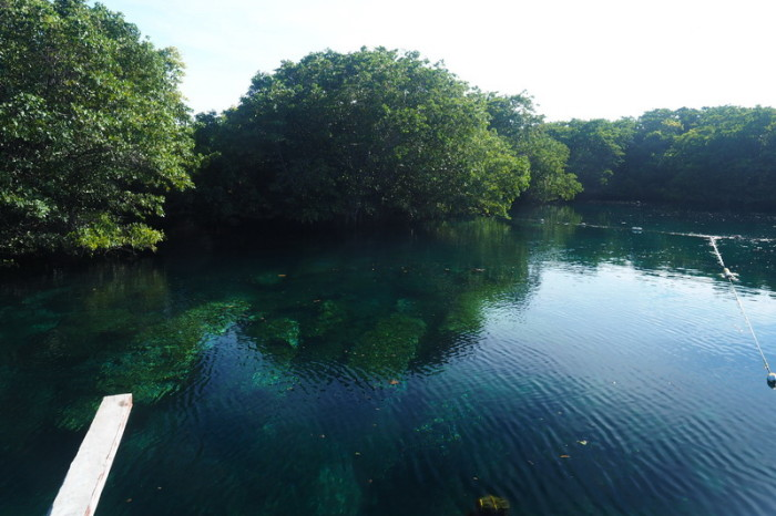 Mexican Road Trip - This cenote is a well-kept local secret! It forms part of a ruined hotel complex and it was free for us to visit and swim here! Quintana Roo, Mexico