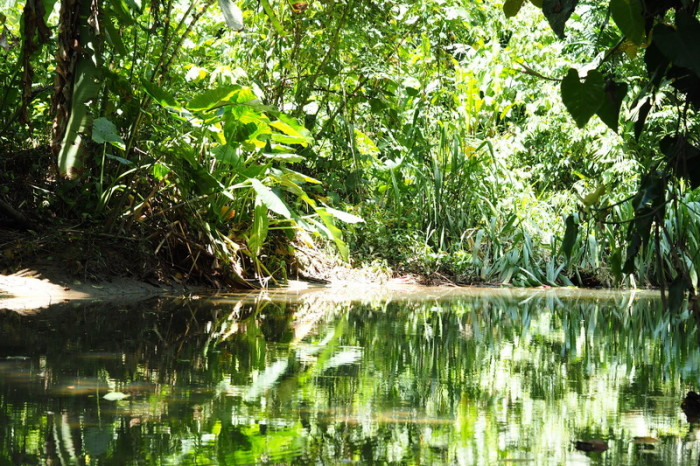 Costa Rica - Guided river tour, Sloth Sanctuary, Costa Rica