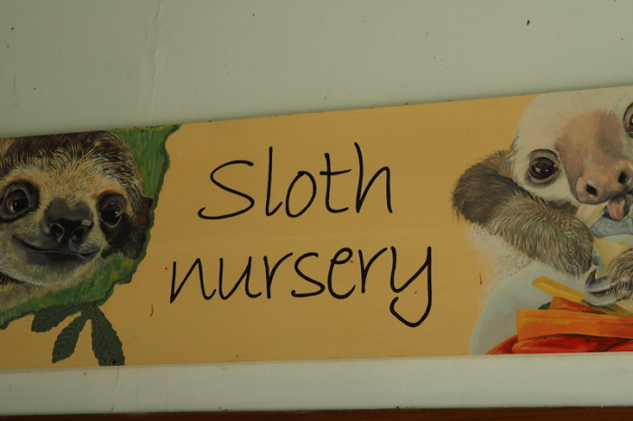 Costa Rica - Baby sloth nursery! Sloth Sanctuary, Costa Rica