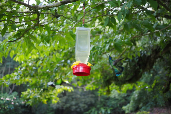 Costa Rica - Humming Bird and Feeder, Curi-Cancha Reserve, near Monteverde, Costa Rica