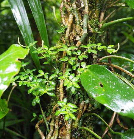 Costa Rica - Curi-Cancha Reserve, near Monteverde, Costa Rica