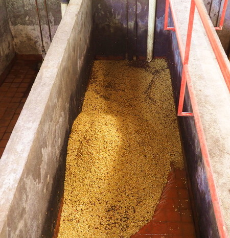 Colombia - The beans are washed in these big containers, Hacienda Venecia, near Manizales