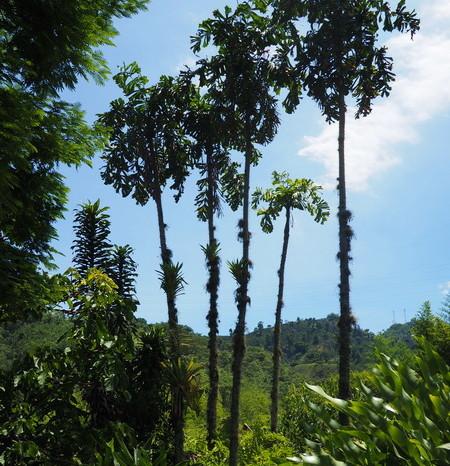 Colombia - Hacienda Venecia, near Manizales