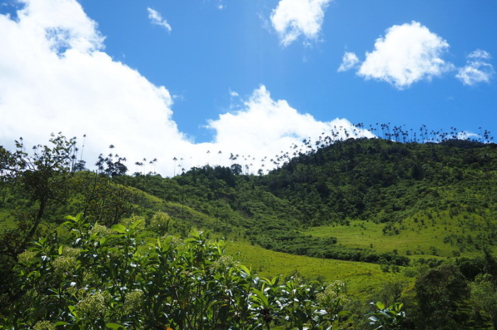 Colombia - Hiking through Valley de Cocora, near Salento