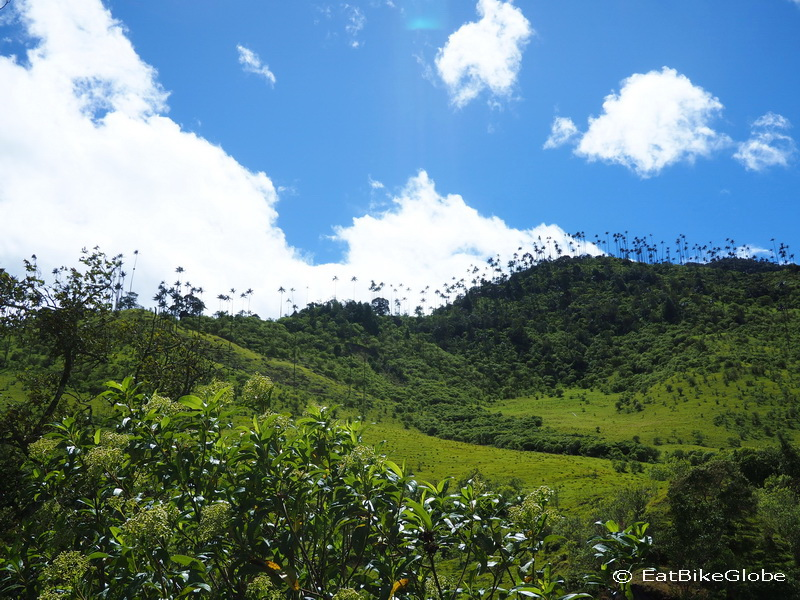 Hiking through Valley de Cocora, near Salento