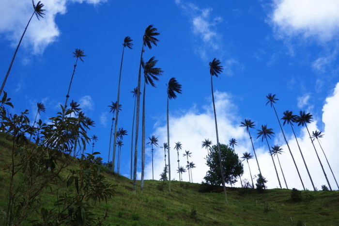 Colombia - Valley de Cocora