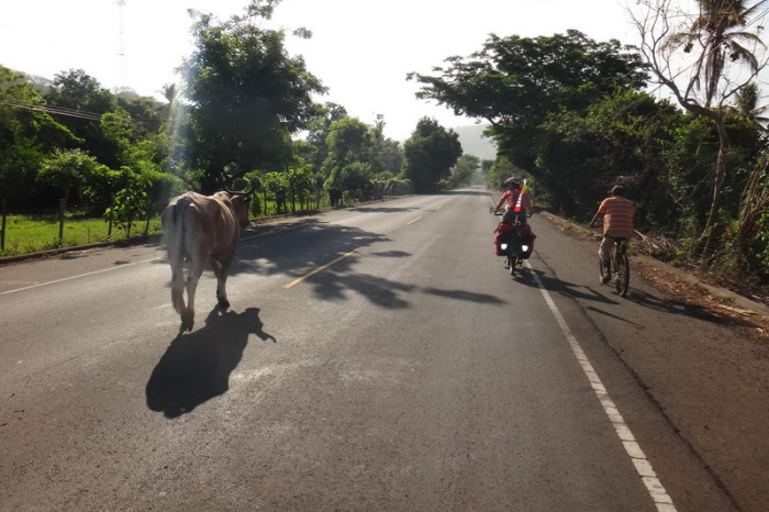 El Salvador - Passing cows on our way to El Tunco, El Salvador