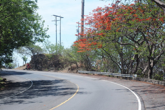 El Salvador - The coastal road to El Tunco was lined with these beautiful trees, with orange flowers