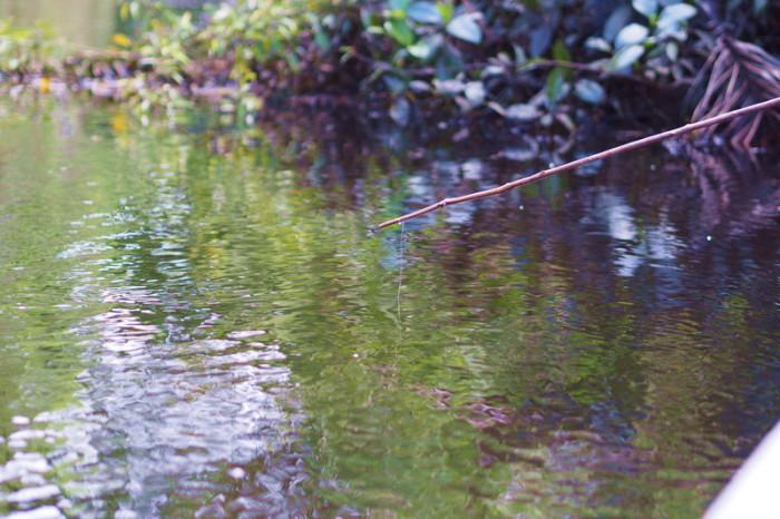 Amazon - Piranha fishing!