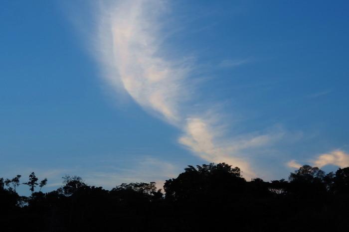 Amazon - Cuyabeno Reserve, Amazon Rainforest