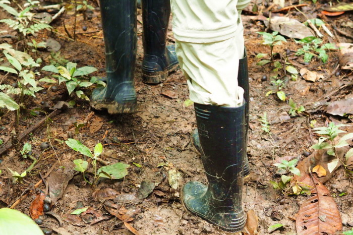 Amazon - The essential rubber boots - it was very muddy in the jungle