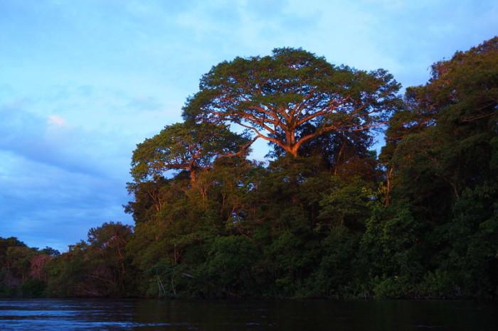 Amazon - Cuyabeno Reserve at dusk