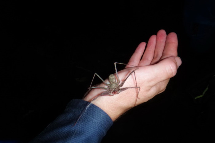 Amazon  - We found this cool spider on our night hike - totally harmless