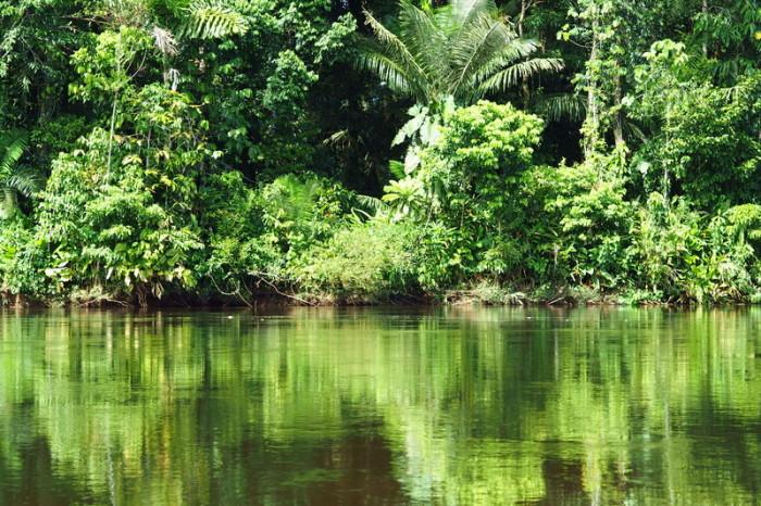 Amazon - More Amazon beauty!
