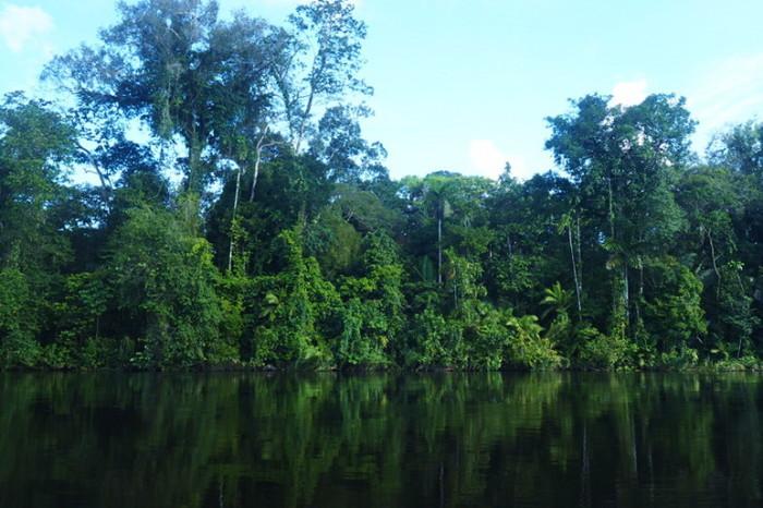 Amazon - The beautiful Amazon Rainforest