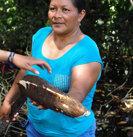 Amazon - Peeling the yuca in the field