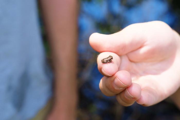 Amazon - Tiny Amazon frog