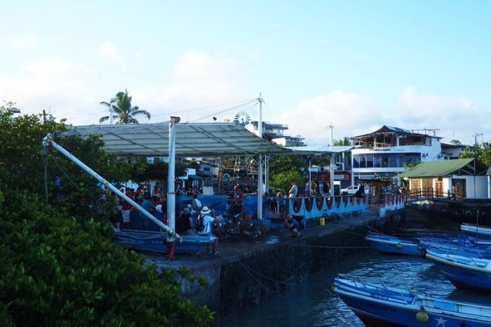 Galapagos - The Puerto Ayora Fish Market, Santa Cruz Island