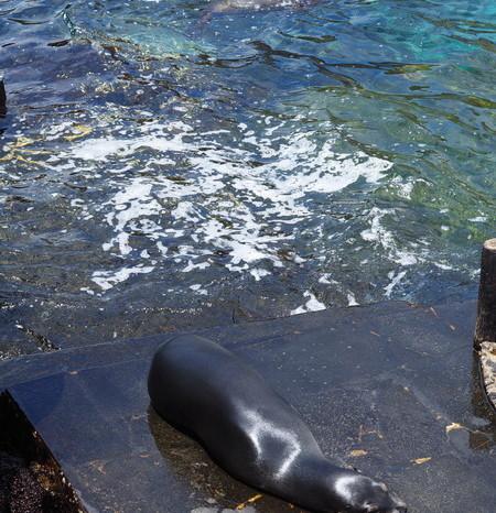 Galapagos - Cheeky sea lions! Bartolome Island