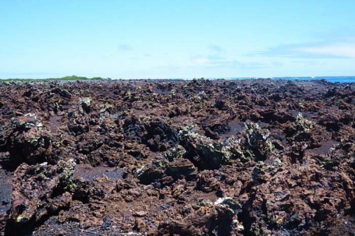 Galapagos - Lava rock, Tintoreras, Isabela Island