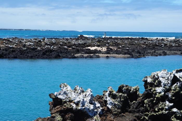 Galapagos - Tintoreras, Isabela Island
