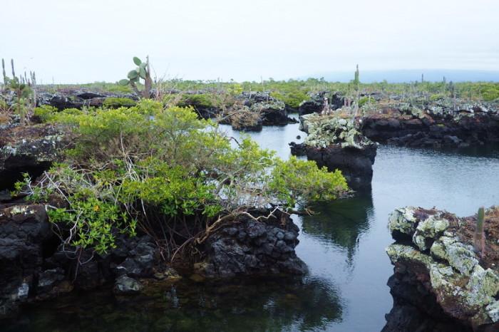 Galapagos - The beautiful Lava Tunnels, Isabela Island