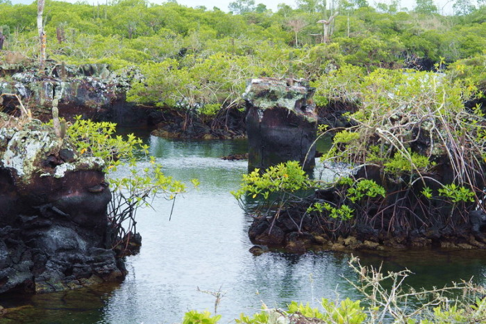 "Galapagos - The wonderful ""Lava Tunnels"",  Isabela Island"