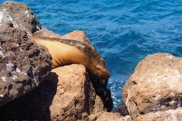 OLYMPUS DIGITAL CAMERA - Sea lion, North Seymour Island